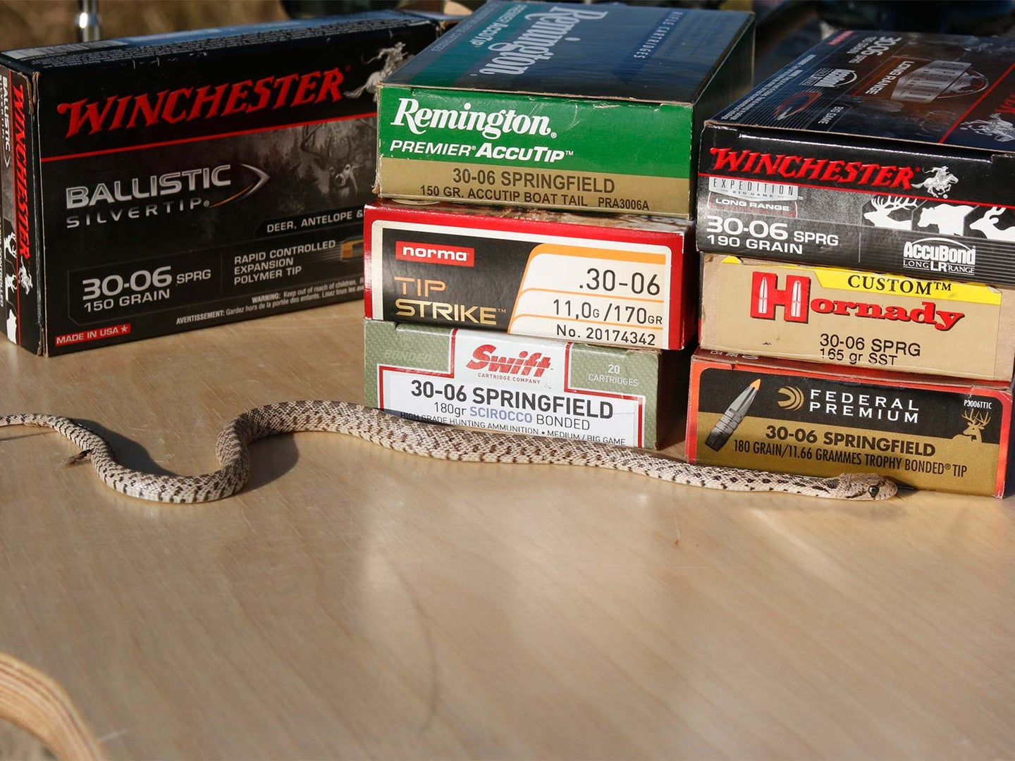 A snake beside boxes of hunting rifle cartridges.