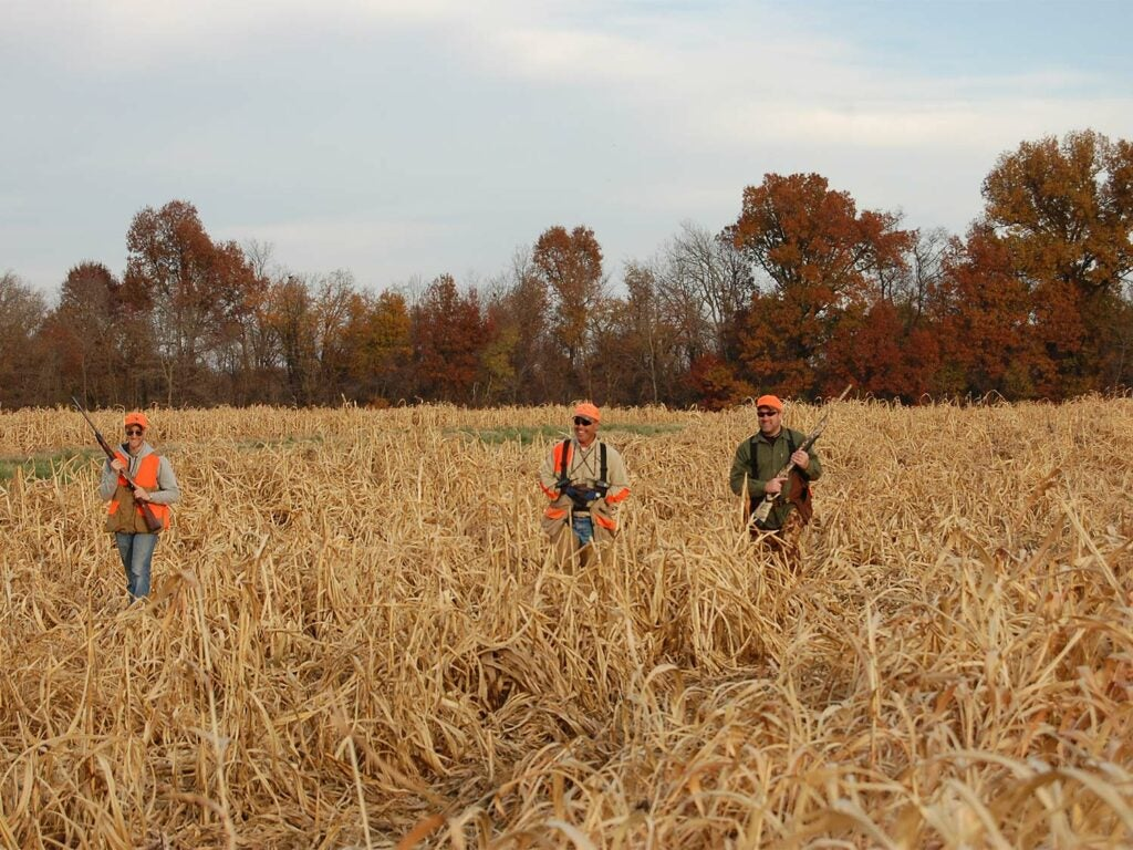 Three hunters walking through a field while bird hunting.