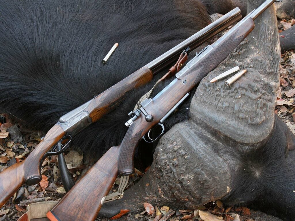 Two hunting rifles laid against a large buffalo in Africa.