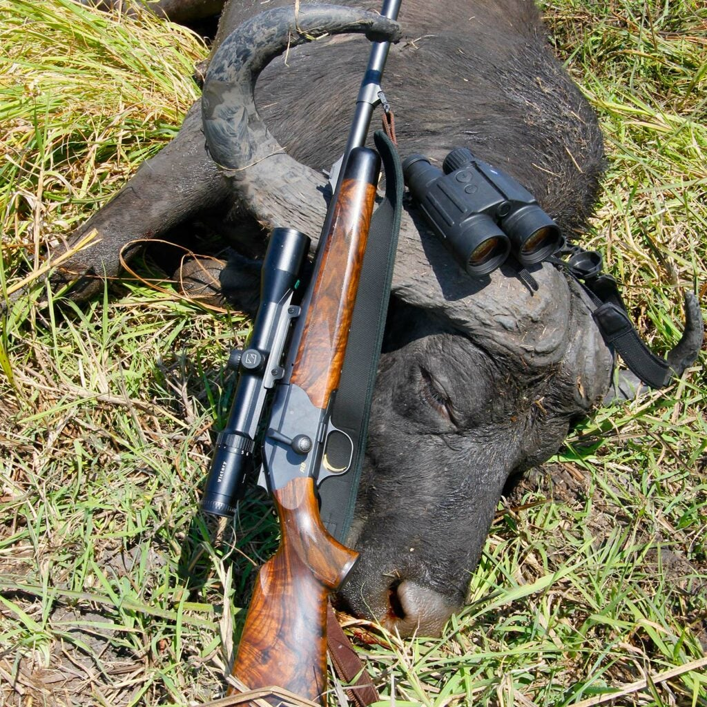 A hunting rifle leaning next to a hunted buffalo on the ground.