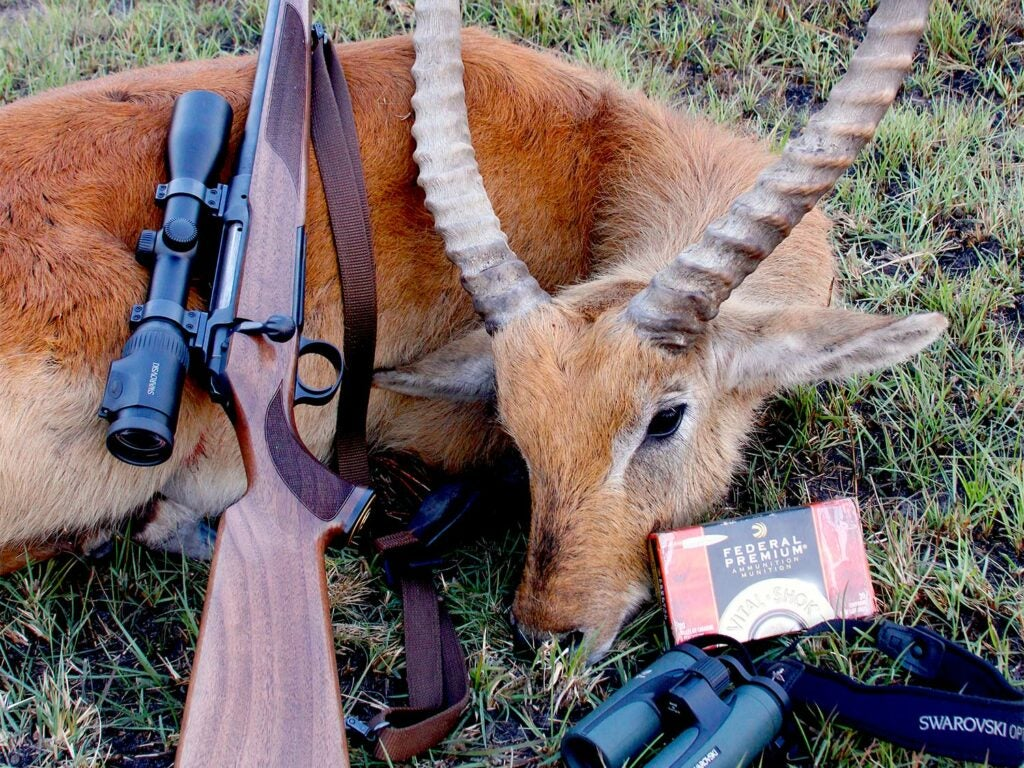 A dead African antelope on the ground with a rifle and ammo leaning against it.