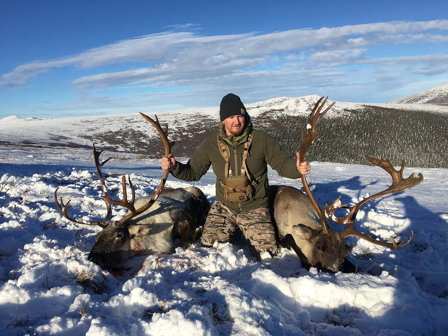 A hunter kneeling beside two large caribou in the snow.
