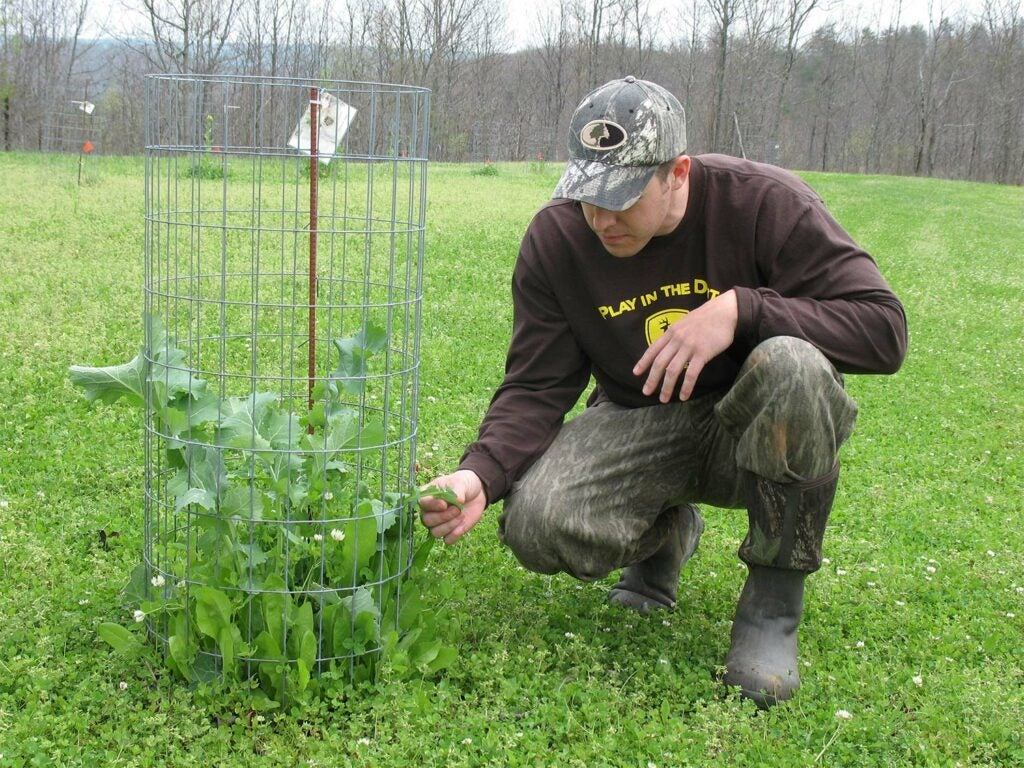 A hunter checks a piece of plant in a field held in an exclusion cage.