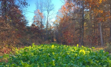 11 Strategies For Growing The Perfect Deer Food Plot