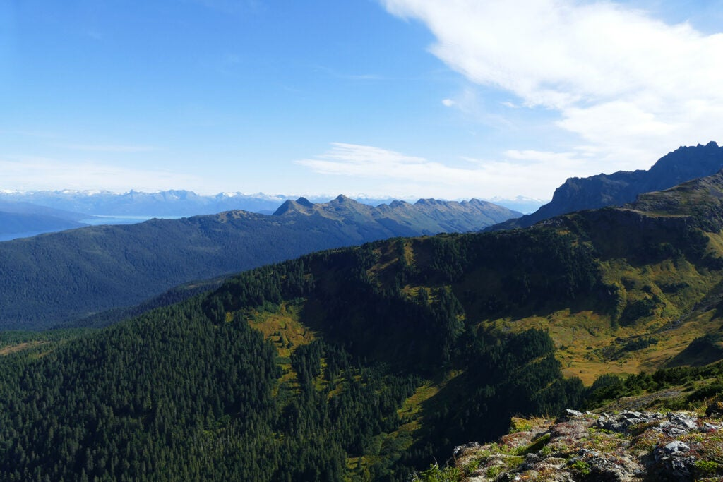 An aerial vista of the sprawling woods of Tongass National Forest.