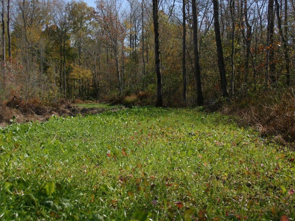 A narrow, long food plot that stretches near a tree line.