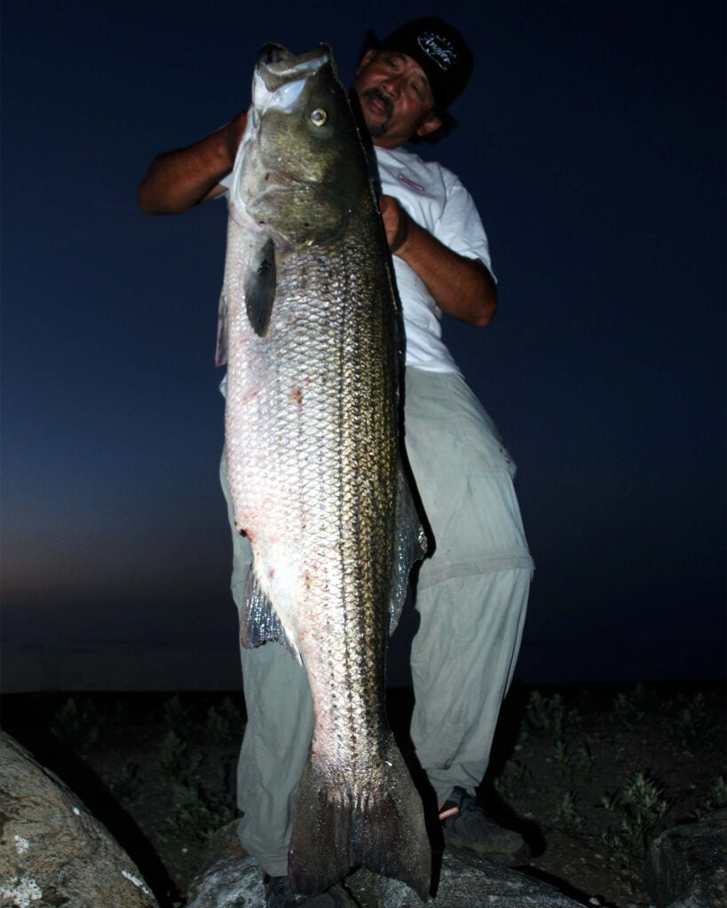 An angler with a large striped bass at night.