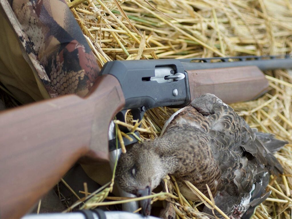 A black and brown rifle lie on a straw-covered ground next to a silver mallard duck.