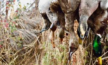 How to Hunt Ducks and Geese