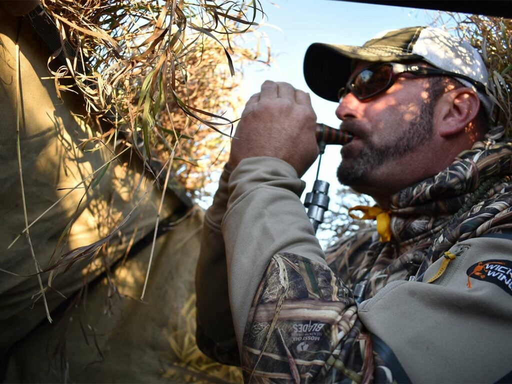 A hunter blows on a duck call in a hay field.