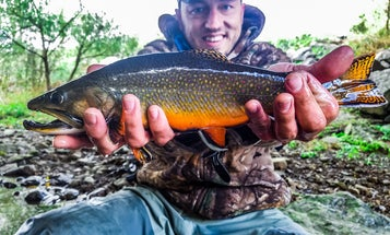 Trout Fishing Tips from the Brookie Whisperer
