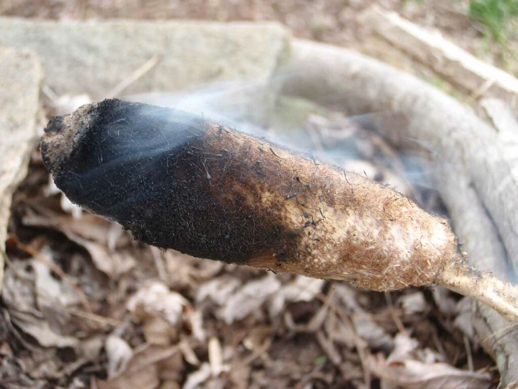 A burning cattail plant.