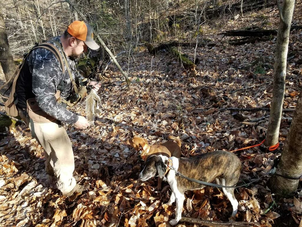A hunter and two dogs in the woods.