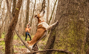 How to Get Started Hunting Squirrels With a Dog