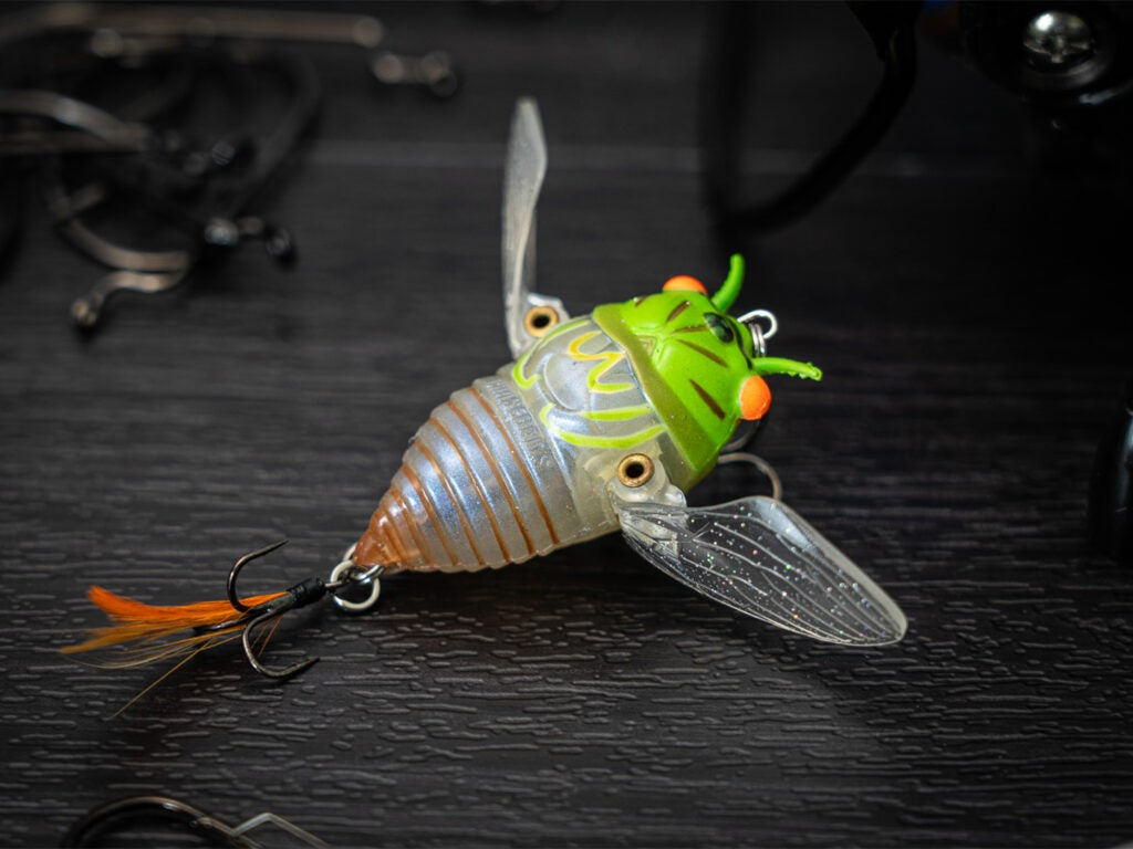 Ripple Cicada fishing lure on a white background.