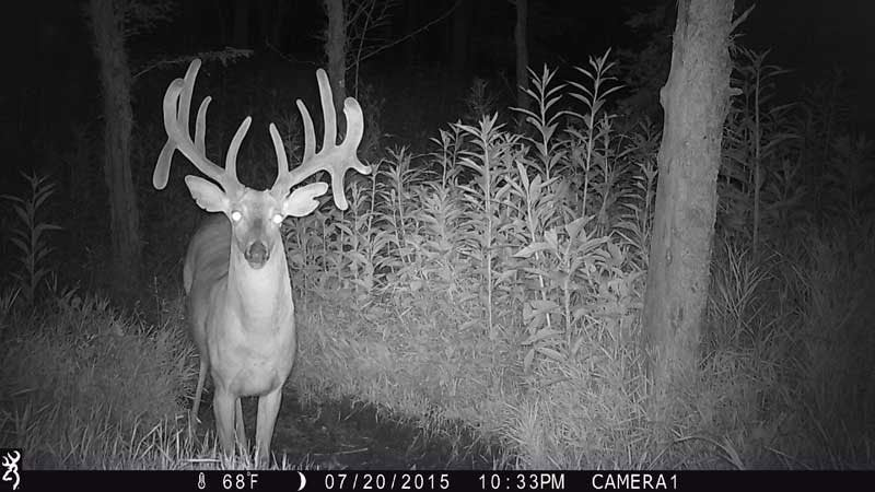 Trail camera footage of a whitetail deer inn the woods at night.