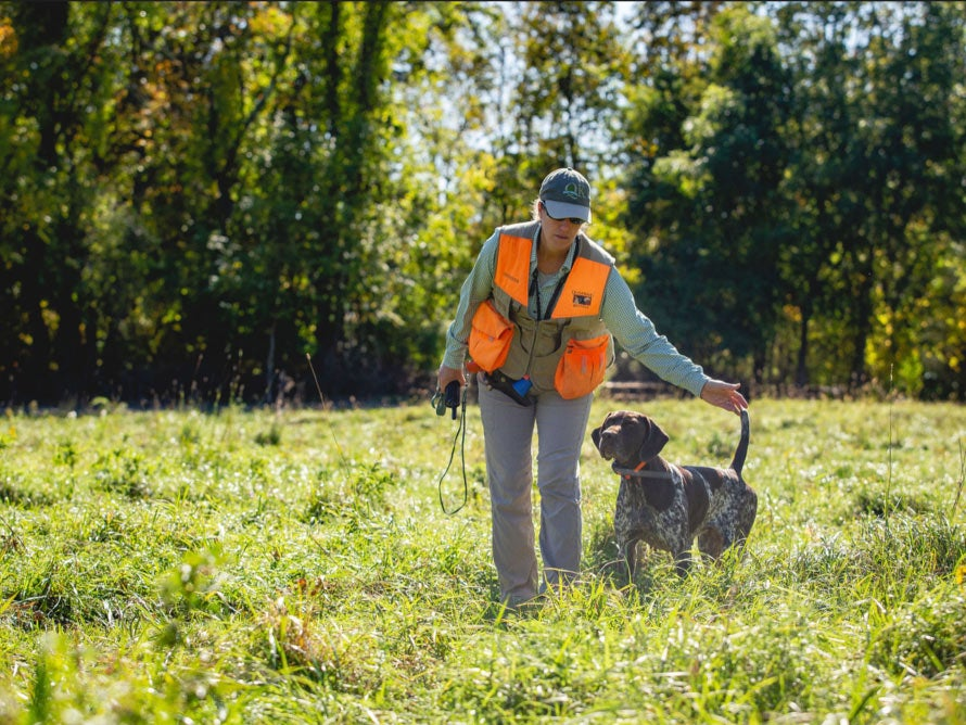 A hunter in an orange vest walks a German shorthair pointer in the field.