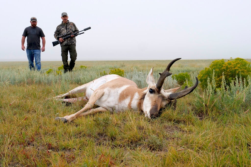Two hunters, one holding a rifle, walk up on a downed pronghorn antelope in an open field.
