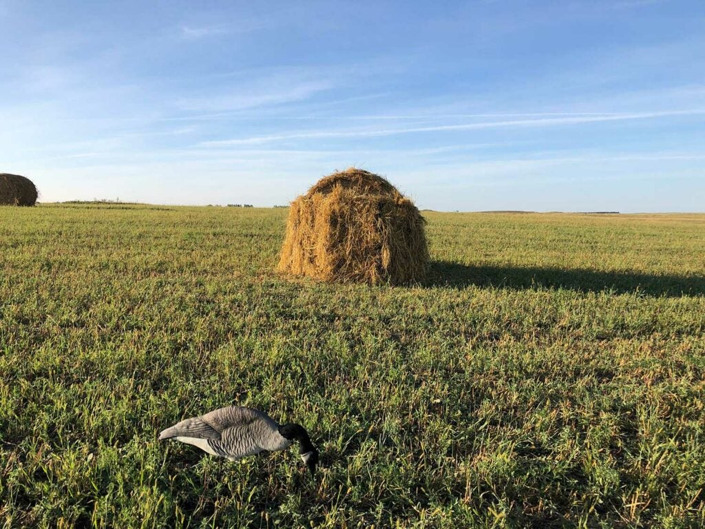 A goose decoy in an open field with a hay bale in the background.