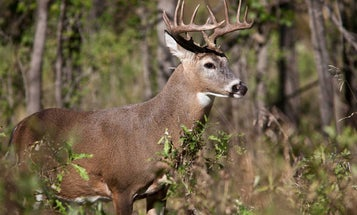 Busted: 10 Myths About Scaring Off Deer