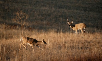7 Ways to Get Ready for the Rut
