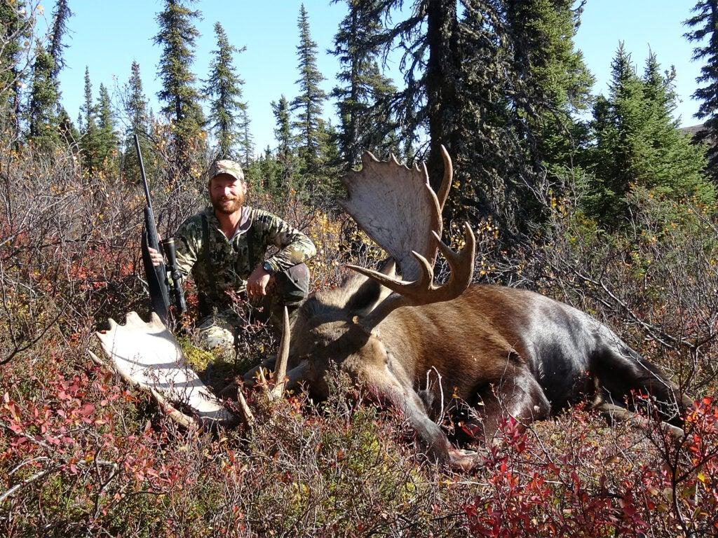 A hunter kneels behind a large alaskan moose.