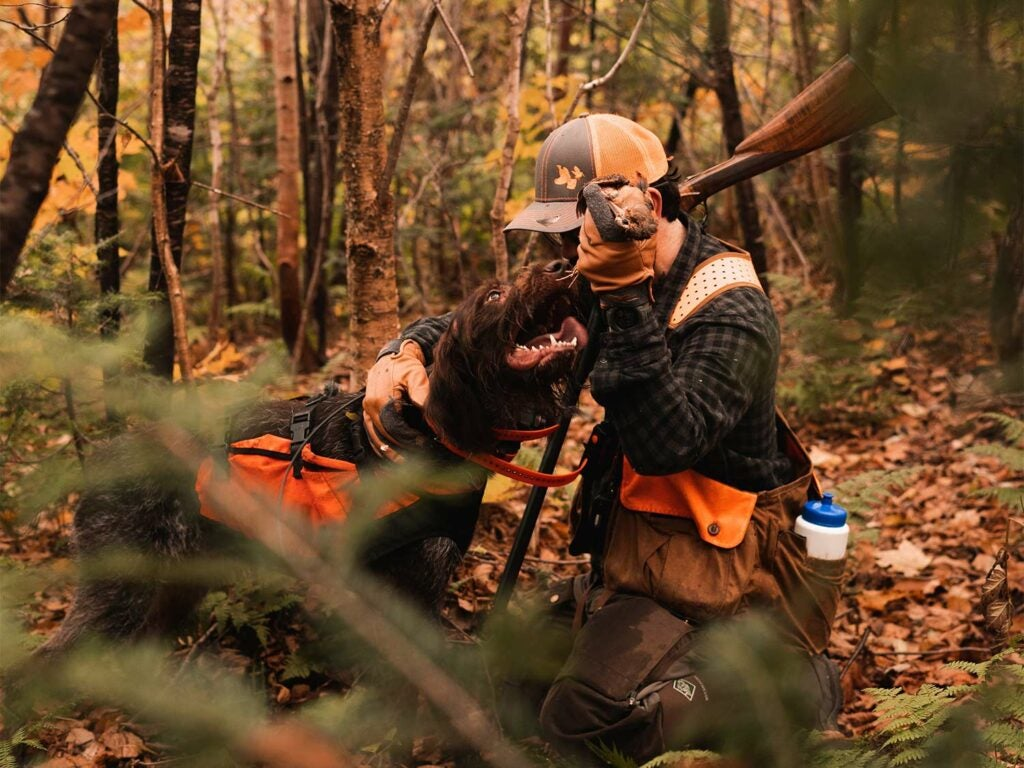A hunter and a hunting dog in the woods.