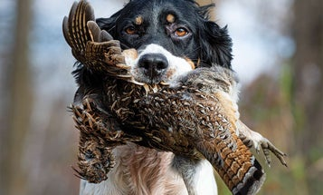The Toughest Grouse Hunts are Always Worth It