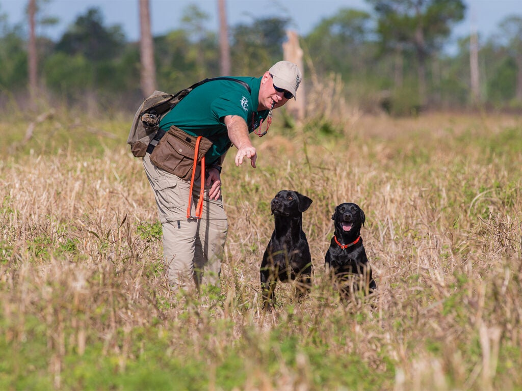 A hunter trains two hunting dogs in an open field.