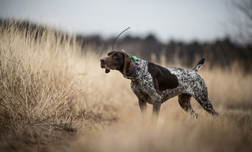 What's in the Bag: The Evolution of Hunting Dog Food