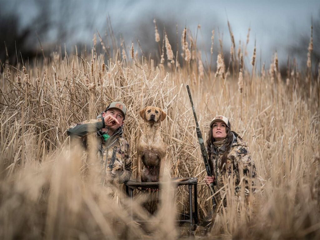 Two hunters in a large field beside a hunting dog.