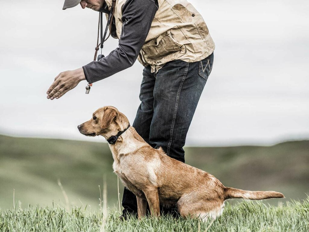 A hunting dog trainer lines up a dog for a blind retrieve in a large open field.