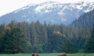 The Forest Service Announced it Will Axe Roadless Rule Protections in Alaska's Tongass National Forest