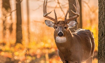 In the Future: CWD Won't Kill Whitetail Deer Hunting