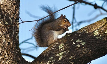 The Ultimate Guide to Hunting Squirrels