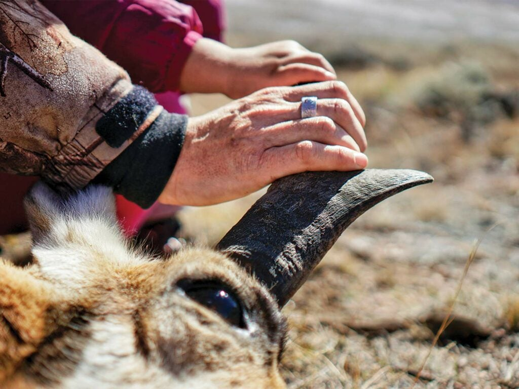 An adult woman's hand resting on the horn of a dead pronghorn antelope with her small daughter's hand on top of hers.