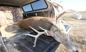 A Strategy for Hunting Mature Bucks on Public Land (That Actually Works in the Real World)
