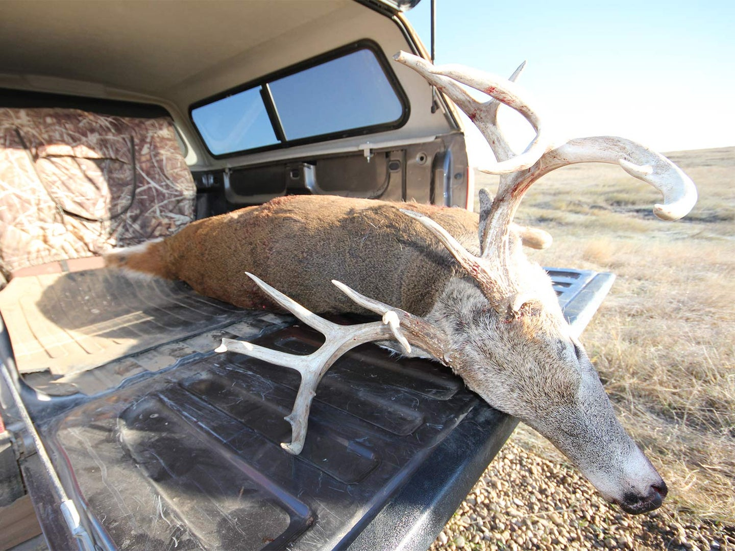 A dead whitetail deer lays in the bed of a hunting truck after a successful hunt.