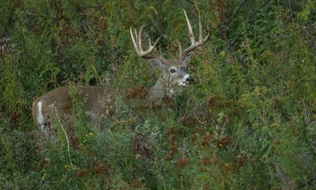 Forget What You Thought You Knew About Hunting Mature Whitetail Bucks (and Start Having More Success)