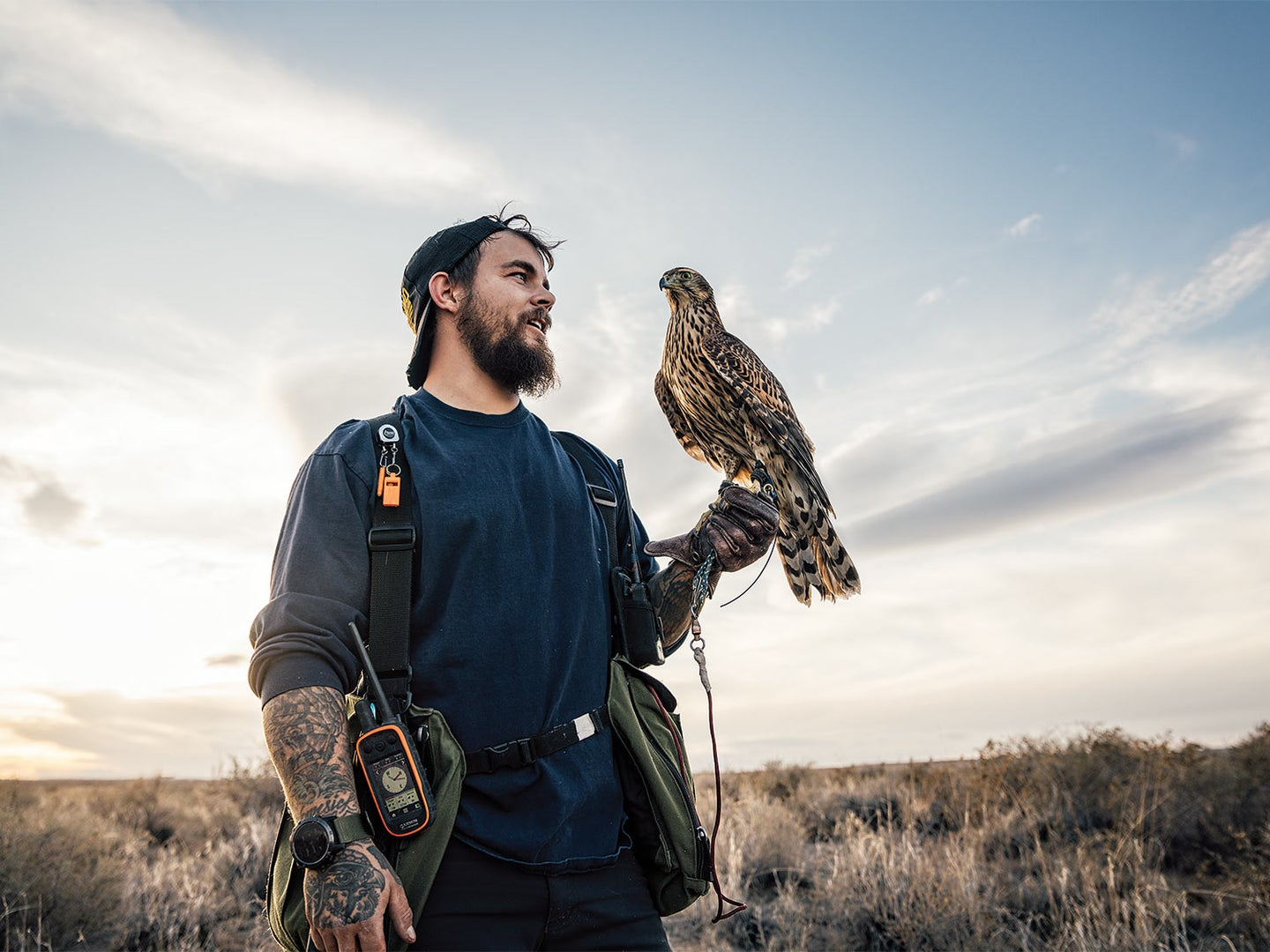 A man holds a hunting hawk on his hand.