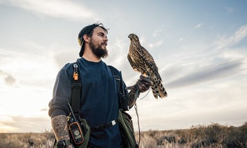This Hunter's Falconry Demands Discipline, Stamina, and a Pack of Bird Dogs