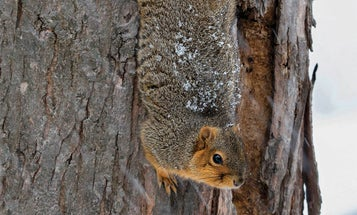 A Good Squirrel Hunt Will Prepare You for a Lifetime of Bigger Game