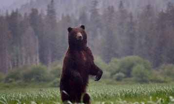 USDA Strips Tongass Roadless-Rule Protections, Favoring Subsidized Logging Interests Over Hunters, Anglers, and Wildlife