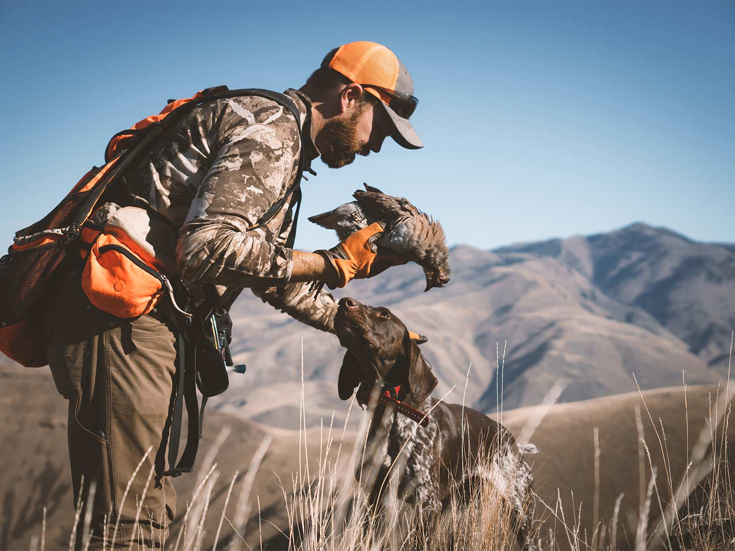 A hunter holds a bird in hand while letting the hunting dog sniff and catch the scent.