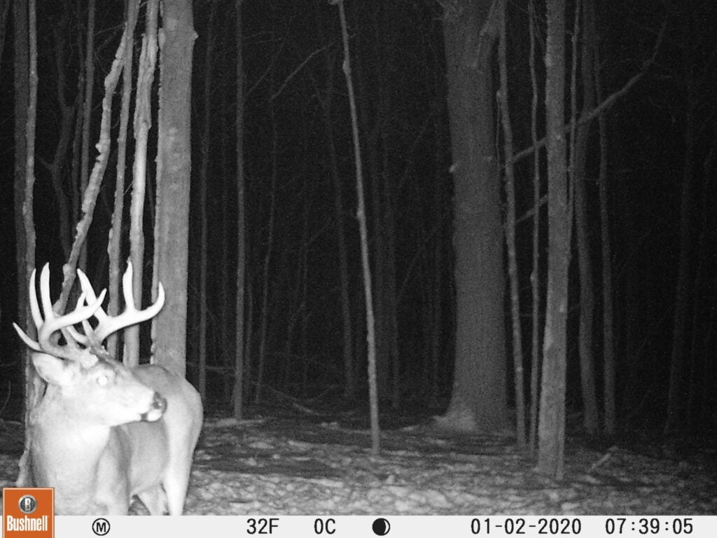 A snowy nighttime Bushnell trail camera photo of a whitetail buck in the woods.
