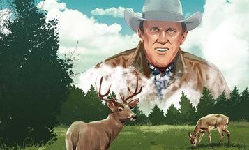 The Origin Story of Food Plots for Deer Hunting