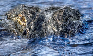 How to Hunt Your First Alligator. Plus, the 7 Best Gator States