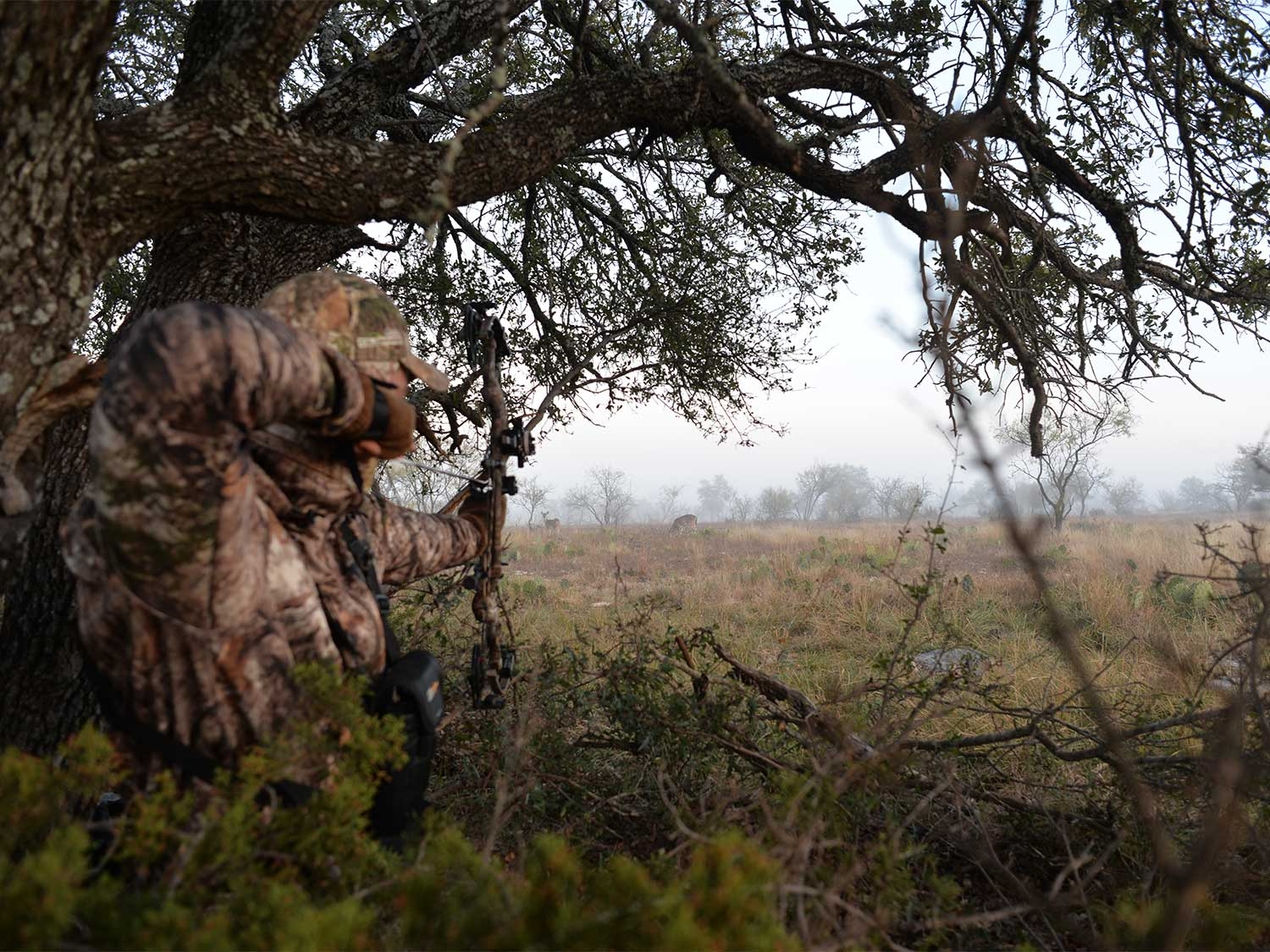 A hunter draws back on a compound bow from in the brush.