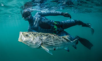The Beginner's Guide to Spearfishing