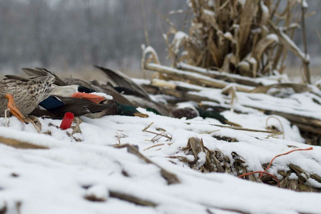 A snowy landscape for duck hunting